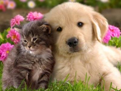 Consejos prácticos para viajar con mascotas
