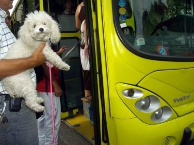 ¿Sabes cómo transportar tu mascota en Metrolínea?