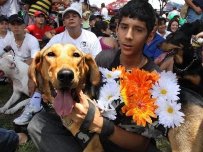 Mascotas tendrán 'Jornada de Adopción y Donación' en Bucaramanga