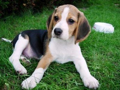 Cómo evitar que tu perro muerda los muebles
