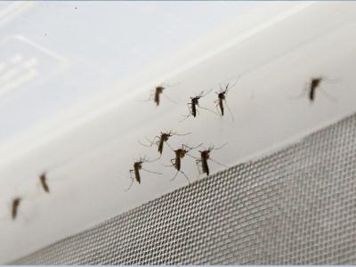 En Bucaramanga el dengue y el chikungunya están disminuyendo, pero el zika aumentó
