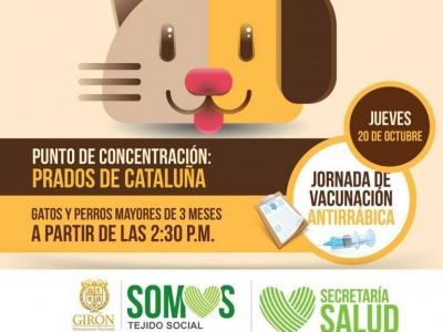 Vacunación gratuita para perros y gatos
